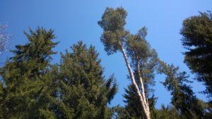 Baum5