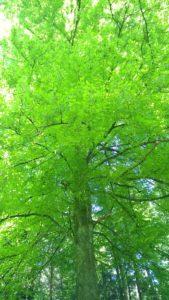 Baum6