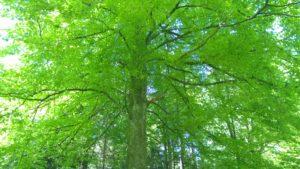 Baum3original